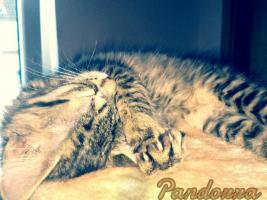 Foto 5 Pandorra, 10 Wochen sucht ein neues freundliches zu Hause