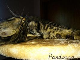 Foto 6 Pandorra, 10 Wochen sucht ein neues freundliches zu Hause