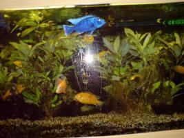Panorama Aquarium 240 Liter