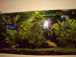Foto 2 Panorama Aquarium 240 Liter