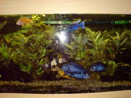 Foto 3 Panorama Aquarium 240 Liter