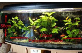 Panoramaaquarium mit Schrank, UV-Filter und Interieur
