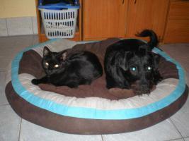 Foto 2 Pantherdame AMICA hat Kuscheldefizit