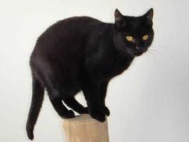 Foto 4 Pantherdame AMICA hat Kuscheldefizit