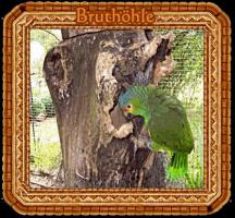 Foto 5 Papageien-Amazonen aus eigener Nachzucht-Handaufzucht