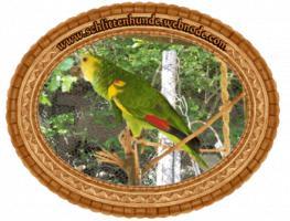Foto 8 Papageien-Amazonen aus eigener Nachzucht-Handaufzucht