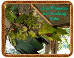 Foto 9 Papageien-Amazonen aus eigener Nachzucht-Handaufzucht