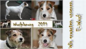 Parson Russell Terrier Welpen  Zucht vom Niggeland in NRW/GT