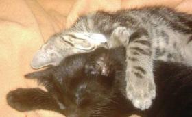 Foto 4 Patenschaften oder Futterspenden für Kitten und Katzen