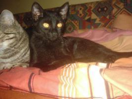 Foto 6 Patenschaften oder Futterspenden für Kitten und Katzen