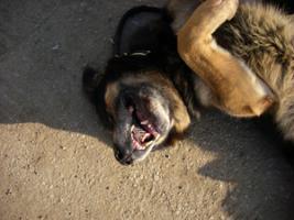 Pele, Deutscher Schäferhund