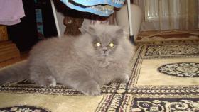 Foto 6 Perser Baby