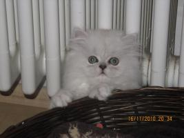 Foto 3 Perser Baby