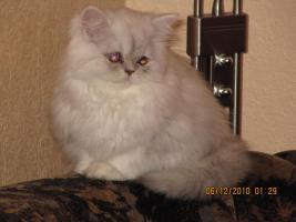 Perser Baby