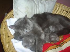 Foto 6 Perser-Babys