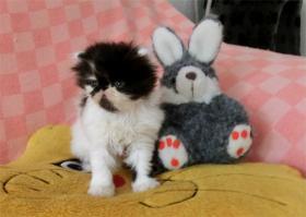 Foto 2 Perser und Exotic Shorthair
