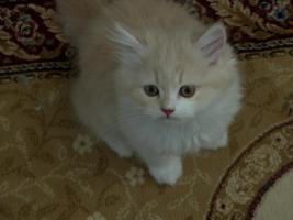 Foto 2 Perserbabys