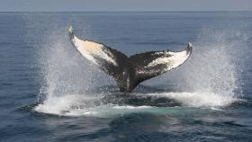 Petition: Stop the Sea Noise
