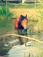 Foto 4 Pferd