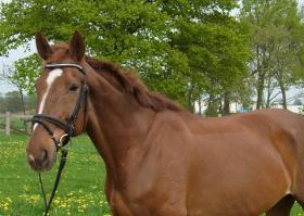 Pferd Dringend zu Verkaufen!!