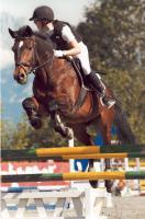Pferd, dass eine verlässliche Reitbeteiligung braucht