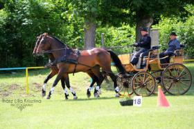 Foto 2 Pferde