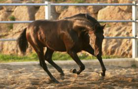 Foto 3 Pferde