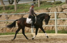 Foto 4 Pferde