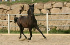 Foto 5 Pferde