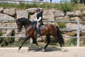 Foto 6 Pferde