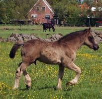 Foto 6 Pferde/Ponies wegen Bestandsverkleinerung abzugeben !!!!