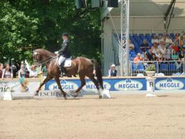 Pferdebeurteilung Teil II:  In der Bewegung-  aus der Sicht des Richters/Tierarztes