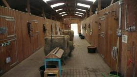 Foto 2 Pferdebox mit Außenpaddock in den Waltroper Rieselfeldern