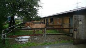 Foto 5 Pferdebox mit Außenpaddock in den Waltroper Rieselfeldern