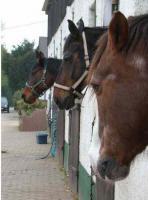 Pferdebox in Koblenz zu vermieten (inklusive Reithallennutzung)