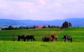 Pferdebox mit Koppelgang