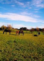 Foto 6 Pferdebox mit Koppelgang