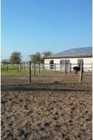 Foto 9 Pferdebox mit Paddock inkl. ganztägiger Koppelgang
