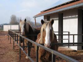 Foto 2 Pferdebox im neuen Außenklimastall