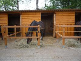 Pferdebox / Offenstall mit Paddock in Schweinfurt frei