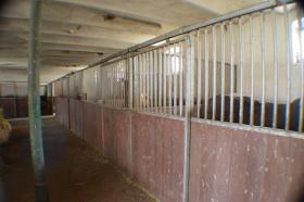 Pferdeboxen