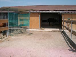 Foto 2 Pferdeboxen und Offenstallplätze zu vermieten