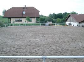 Foto 3 Pferdeboxen und Offenstallplätze zu vermieten