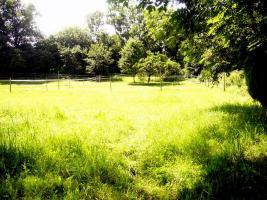 Foto 2 Pferdeboxen mit großen Paddocks in toller Natur