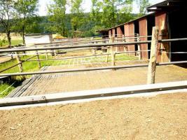 Foto 5 Pferdeboxen mit großen Paddocks in toller Natur