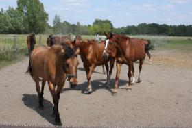 Foto 2 Pferdeboxen zu vermieten
