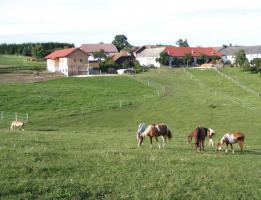 Foto 2 Pferdeeinstellplätze in Hellmonsödt frei!