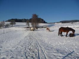 Foto 3 Pferdeeinstellplätze in Hellmonsödt frei!