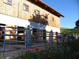 Foto 5 Pferdeeinstellplätze in Hellmonsödt frei!