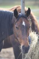 Pferdehalterseminar: Kolik, Kotwasser, Allergie & Co